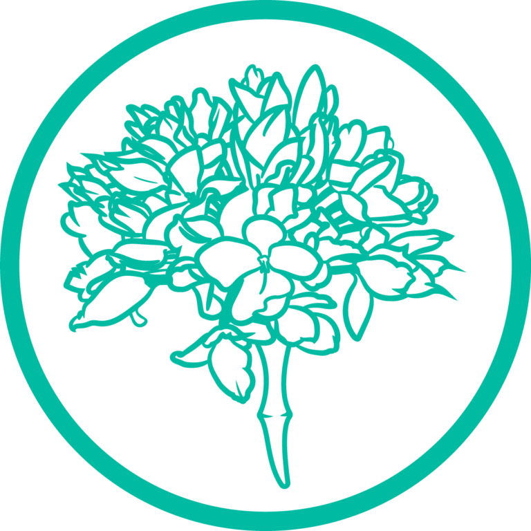 biznaga-verde-circulo